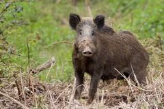 Fauna selvatica, Coldiretti Puglia preoccupata per ennesimo rinvio disegno di legge
