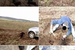 Cinghiale investito e sgozzato sulla Murgia, il video corre in rete
