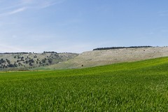 Il 1° maggio la 12 passeggiata naturalistica Alta Murgia