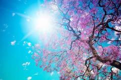 Arriva la primavera: temperature sopra i 20 gradi