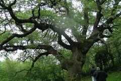 Abbraccia anche tu un albero