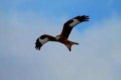 Una giornata di birdwatching nel Parco dell'Alta Murgia