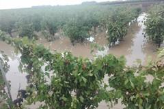 """Copagri Puglia: """"I fondi per la calamità non ci sono"""""""