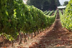 Consumo di frutta e verdura: per la Puglia triste primato nazionale