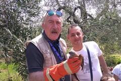 Recuperato falco grillaio ferito: intervengono i volontari Federiciani