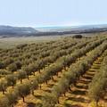 La Puglia per la valorizzazione dell'agricoltura a km 0