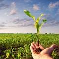Marittimi e agricoltori potranno anticipare la pensione