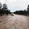 Coldiretti, il maltempo ha fatto danni per milioni nelle campagne