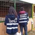 Corso per Guardie zoofile dell'Oipa Bat: aperte le iscrizioni