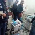 La Guardia costiera sequestra nella Bat numerose tonnellate di pesce mal conservato