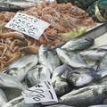 Stop al pesce fresco pugliese fino a inizio settembre, prorogato il fermo pesca