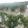 """Copagri Puglia:  """"I fondi per la calamità non ci sono """""""