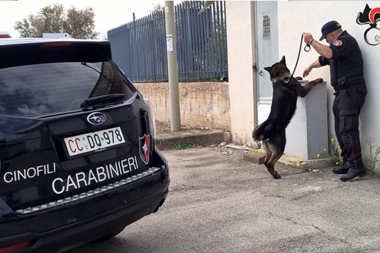 Unità cinofile dei carabinieri