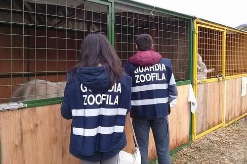 guardie zoolofile