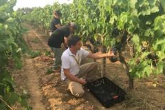Green Pass, Coldiretti: «In Puglia salva turismo e agricoltura»
