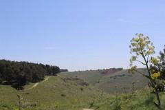 Il Parco dell'Alta Murgia riparta dal rilancio della sua natura
