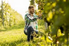 Agricoltura in Puglia, diminuiscono le giovani imprese
