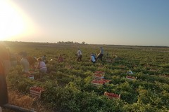 Lunga zona rossa in Puglia, Coldiretti: «Rafforzare misure di sostegno»