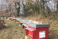Giornata mondiale delle api, «È allarme, la loro scomparsa un danno ambientale»