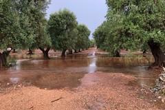 Piogge intense, in Puglia danni ai terreni e grave dispersione idrica