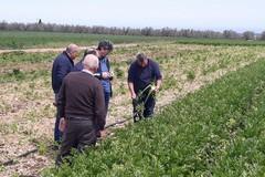 Ridotti i tempi per contributi per aziende agricole colpite da calamità