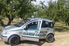 Contrasto alla criminalità rurale, in azione anche le Guardie Campestri