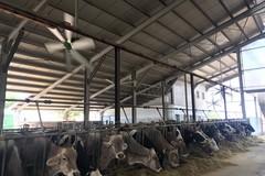 Covid, crack da 5 milioni per le stalle pugliesi. «Urge supporto filiera lattiero-casearia»