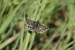 """""""Alta Murgia: un Parco per api e farfalle"""", al via il monitoraggio nel Parco"""