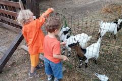 Bonus baby sitter anche per le fattorie didattiche