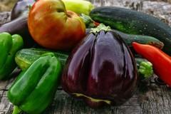 Recovery Plan, dal cibo 100mila posti di lavoro green