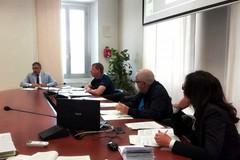 Emergenza cinghiali sull'Alta Murgia, Tarantini: «Contenimento tra le nostre priorità»