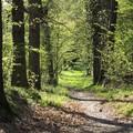 Allarme inquinamento, Coldiretti Puglia: «Con fondi UE creare foreste urbane»