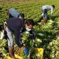 Agricoltura, nel 2020 perse 30mila giornate di lavoro in Puglia