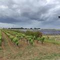 "Terra mangiata da impianti fotovoltaici,  ""Urge legge contro pannelli selvaggi """