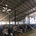 Sos caldo, nelle fattorie gli animali sotto stress termico
