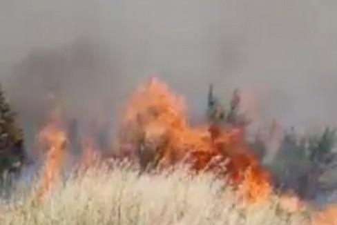 Incendio Bosco di Acquatetta - Arif